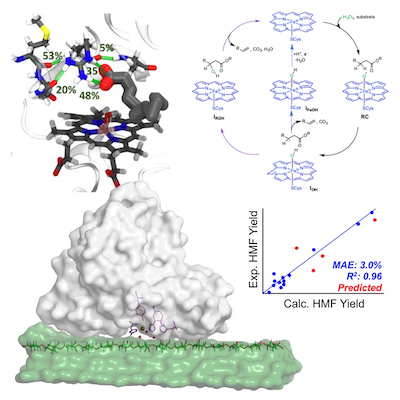 Mechanism-Driven Discovery of Biopolymer Upgrading